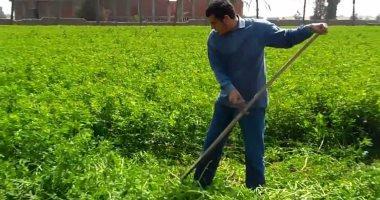 الزراعة تعلن الموافقة على تصدير 1189 طن تقاوى لـ5 دول خلال 7 أيام