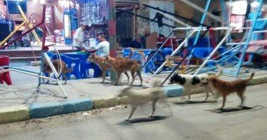 الكلاب الضالة تحاصر شوارع زهراء مدينة نصر