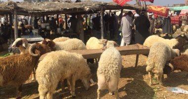 الزراعة: حملات مستمرة على شوادر بيع العجول والاغنام للتأكد من سلامتها