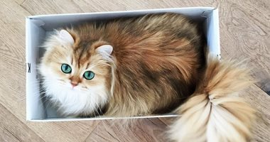 إصابة أول قطة بفيروس كورونا فى بلجيكا