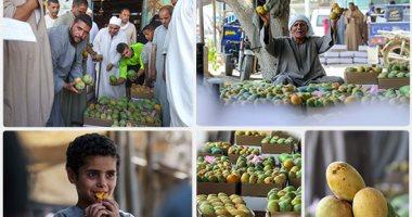 الزراعة: ارتفاع صادرات المانجو لـ 15211 طنا ومباحثات لفتح أسواق جديدة