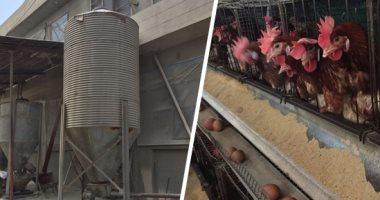 """صور.. """"اليوم السابع"""" داخل أكبر مشروع لإنتاج بيض المائدة بالغربية.. المشروع يضم 5 عنابر على مساحة 3 أفدنة ويضم 84 ألف دجاجة وإنتاجه يصل لـ60 ألف بيضة يوميا.. مدير المشروع: البورصة تحدد سعر بيع الطبق"""
