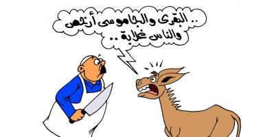"""الحمير تستغيث .. البقرى والجاموسى أرخص بكاريكاتير """" اليوم السابع"""""""