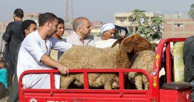 """""""الزراعة"""" تقدم 9 نصائح عند شراء خروف العيد.. وتحذر من الباعة الجائلين"""