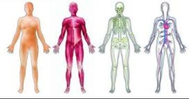 اعرف جسمك .. 8 حقائق لا تعرفها عن أعضائك