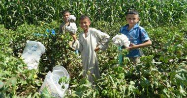 """الزراعة: مبادرة """"قطن أفضل"""" تفتح نافذة جديدة لتصدير القطن المصرى للخارج"""
