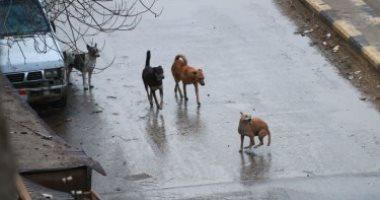 شكوى من انتشار الكلاب الضالة بمنطقة المستقبل فى العبور