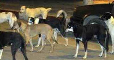 شكوى من انتشار الكلاب الضالة فى شارع العروسى بشبرا