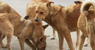 أهالى سيدى بشر بالإسكندرية يستغيثون من انتشار الكلاب الضالة
