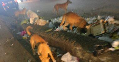 الكلاب الضالة تهدد ساكنى شوارع فيصل الجانبية ومناشدة برفع القمامة