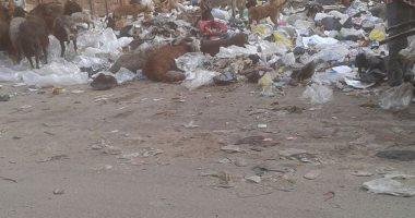 شكوى من انتشار الكلاب الضالة بسبب تراكم القمامة فى شوارع المطرية