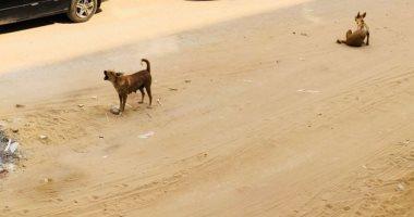 الكلاب الضالة والشرسة تحاصر شوارع زهراء المعادى