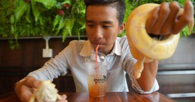 افتتاح مقهى يقدم المشروبات مع الثعابين الحية والزواحف فى كمبوديا