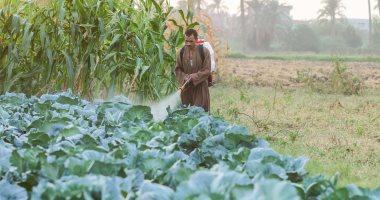 أشيل السموم من الزرع لاجل البلد تاكل.. يوم فى حياة عامل رش الأراضى الزراعية بالمبيدات