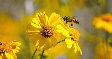 سم النحل.. أحدث طرق العلاج الطبيعى لمرضى الأكزيما