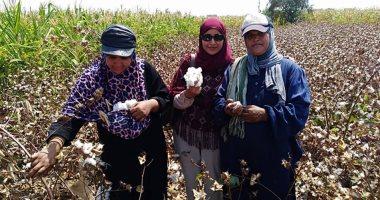 5 لجان متخصصة لفحص زراعات القطن ومكافحة آفة المحصول لزيادة الإنتاج