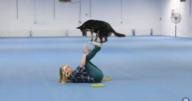 فيديو.. كلبان يحطمان أرقاما قياسية بالقفز ويدخلان موسوعة جينيس
