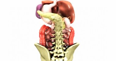 اعرف جسمك الصائم جزء مهم من أمعاءك الدقيقة