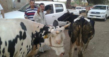 """""""الزراعة"""" تعلن تسجيل وتأمين 131 ألف رأس ماشية للتعرف على الأمراض الوبائية"""