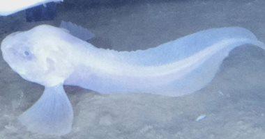 علماء يعثرون على 3 أنواع جديدة من الأسماك تعيش فى قاع المحيطات