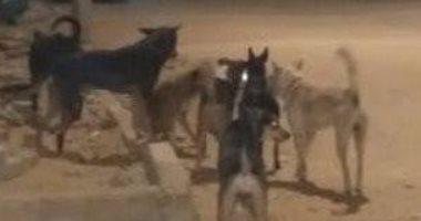 شكوى من انتشار الكلاب الضالة بزهراء مدينة نصر
