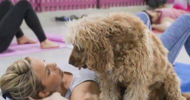 شاهد.. لأول مرة ممارسة التمارين الرياضة مع الكلاب تساعدك على الاسترخاء