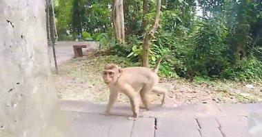 فيديو قرد صغير يداعب سائحا فى تايلاند لخطف كاميرا التصوير