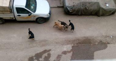 قارئ يشكو من انتشار الكلاب الضالة بشارع المرأة الجديدة فى مصر القديمة