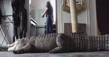 فيديو.. فرنسى يحول منزله لحديقة حيوان تضم 400 نوع من الزواحف