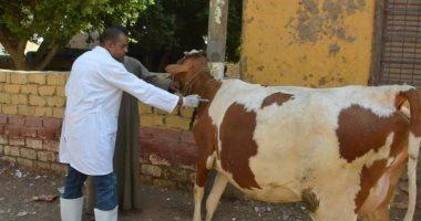 """""""الزراعة"""" تبدأ خطة الإنذار المبكر لمواجهة أمراض الماشية العابرة للحدود"""