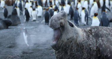 ضحك بس أفضل 41 صورة فى مسابقة كوميديا الحياة البرية