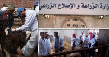 الحكومة تنفى ظهور سلالة جديدة من أنفلونزا الطيور في مصر