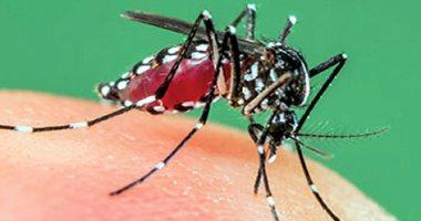 """علماء """"هارفارد"""" يحذرون من انتشار حمى الضنك فى أولمبياد صيف 2020 فى طوكيو"""