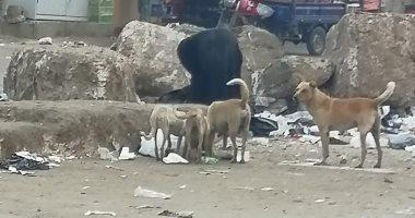 شكوى جماعية من انتشار الكلاب الضالة فى شوارع البساتين