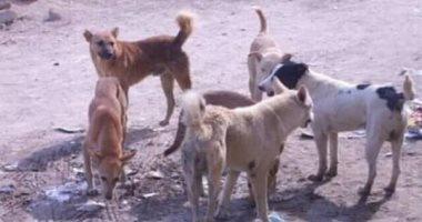 قارئ يشكو انتشار الكلاب الضالة بشارع محمد مبروك فى بشتيل