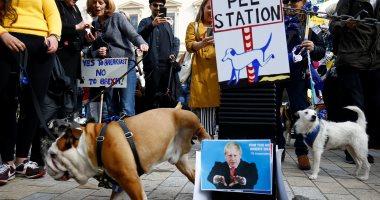 أصحاب الكلاب يتظاهرون فى لندن للمطالبة بالبقاء فى الاتحاد الأوروبى