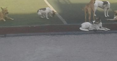 انتشار الكلاب الضالة داخل نادى طلائع الزيتون