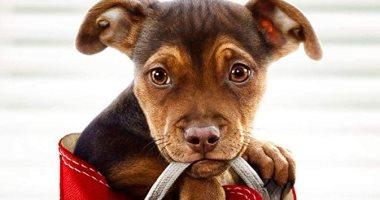 """فيلم """"A Dog's Way Home"""" يحقق 12 مليون دولار في ثلاثة أيام"""