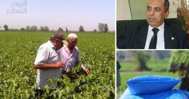 """""""البحوث الزراعية """" تعقد ندوات إرشادية عن أهمية زراعة القمح على مصاطب"""