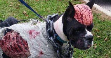 صور الكلاب تشارك فى احتفالات الهالوين بملابس واكسسوارات مرعبة
