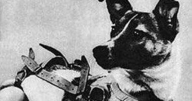 """اليوم الذكرى الـ62 على إطلاق الكلبة """"لايكا"""" للفضاء"""