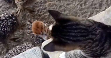 """""""لك يوم يا ظالم"""".. نعام تنتقم من قطة تعدت على صغارها (فيديو)"""
