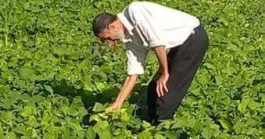 """""""الزراعة"""" تشكل لجان لفحص زراعات الفاصوليا بمركز أبو المطامير فى البحيرة"""