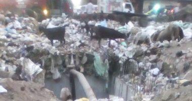 صور.. شكوى من تراكم القمامة بالمسلة الجديدة فى المطرية
