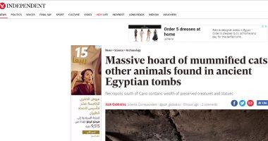مواقع أجنبية تسلط الضوء على اكتشاف خنافس الجعران ومومياوات القطط بسقارة