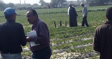 صور.. الزراعة تكافح الآفات بمحصول الفراولة فى محافظة القليوبية