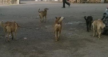 شكوى من انتشار الكلاب الضالة فى شارع على بن أبى طالب فى أرض اللواء بالجيزة