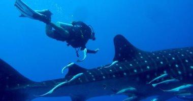 علماء الأحياء يعثرون على نوع جديد من الحيتان القاتلة