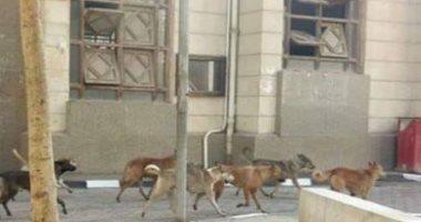 شكوى من إنتشار كلاب ضالة داخل حرم كلية الهندسة بالمطرية