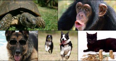 """""""القرد في عين أمه"""" و""""ديل الكلب"""".. كيف سيطرت الحيوانات على الأمثال الشعبية"""